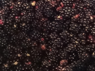 Blackberry & Aniseed Cordial