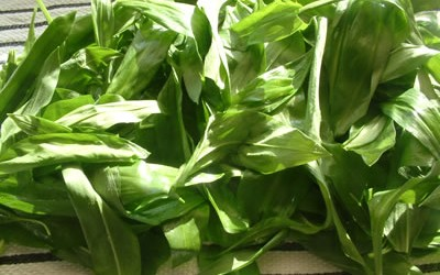 Drain after washing