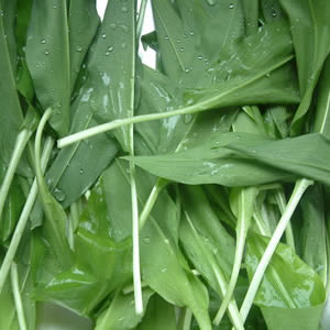 Wild Garlic Greens