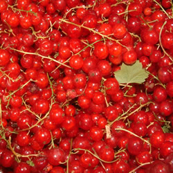 Redcurrant Wine (Bordeaux)