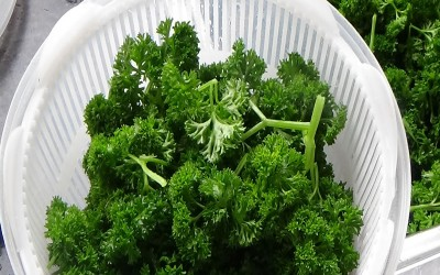 Curly Parsley